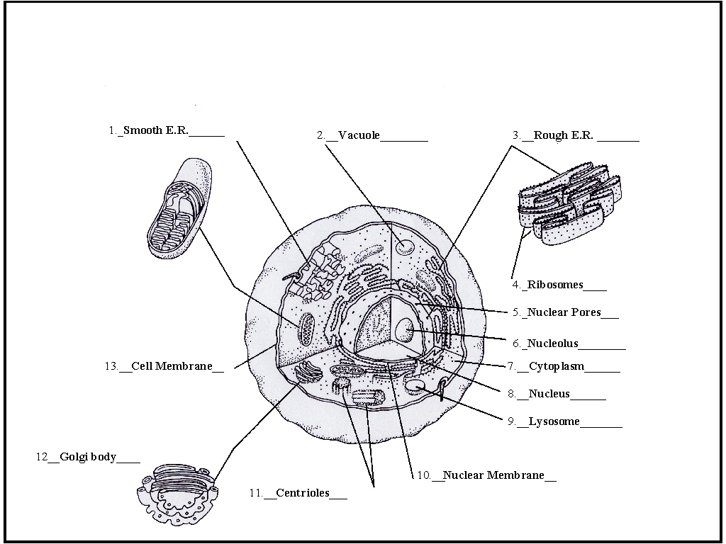 Volvox Diagram Labeled
